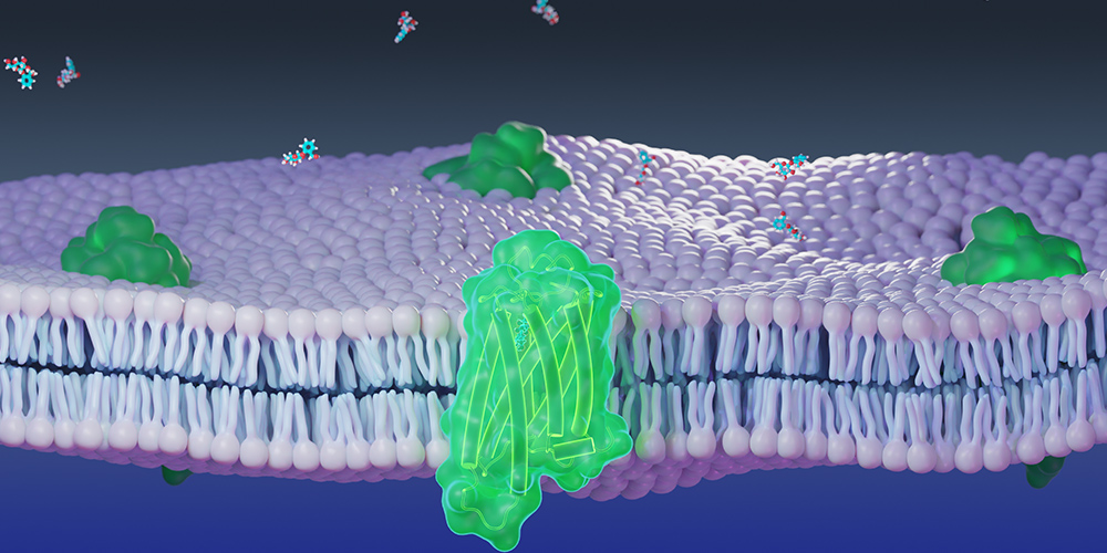 Molecular model of chemosensory receptor (green) and cellular membrane (purple) used in numerical and molecular simulations